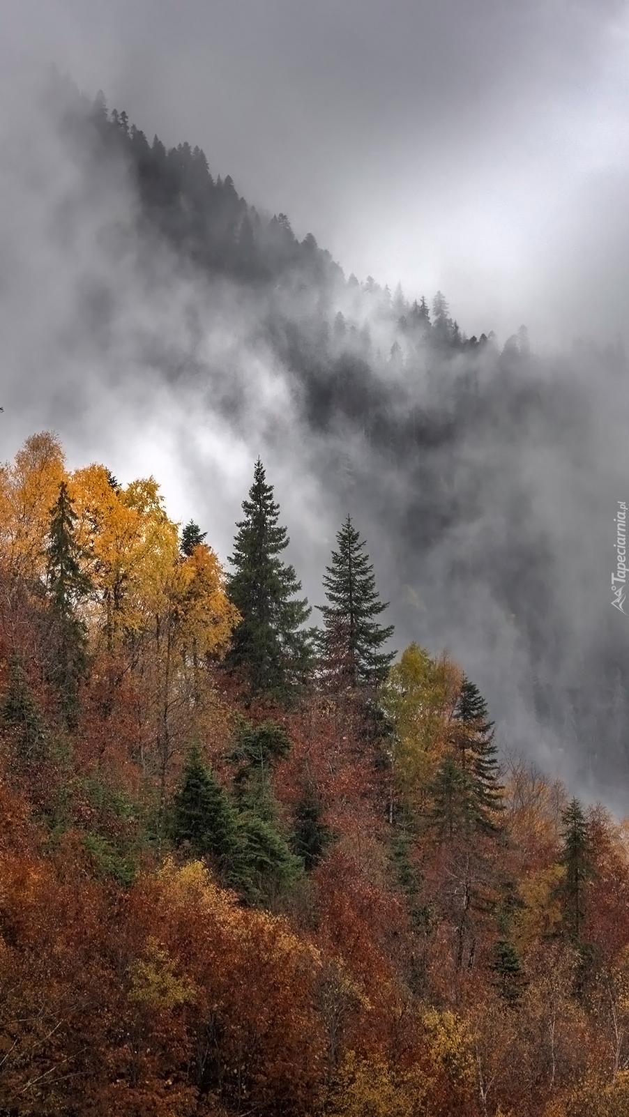 Mgła unosząca się nad drzewami