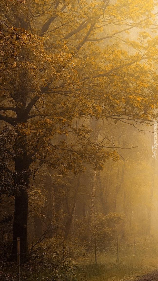 Mgła w jesiennym lesie