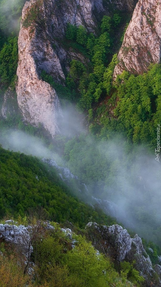 Mgła w wąwozie