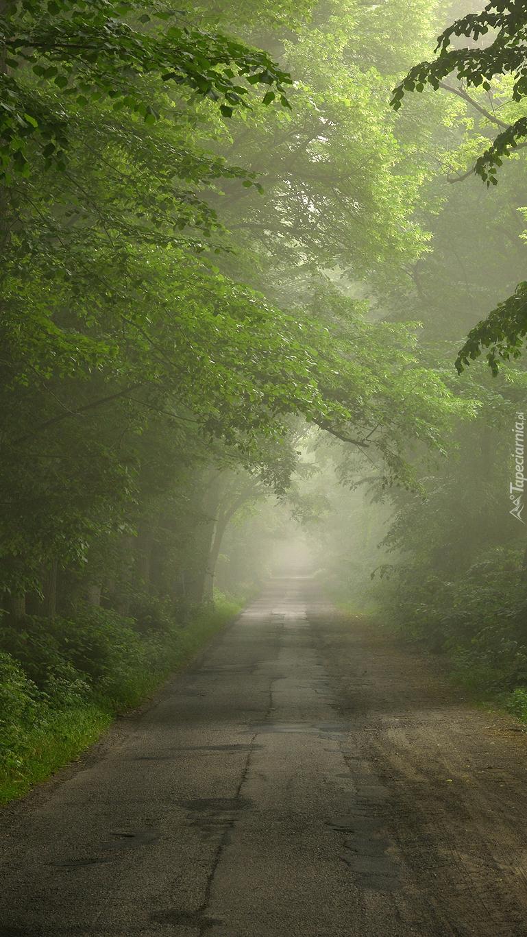 Mglista droga w lesie