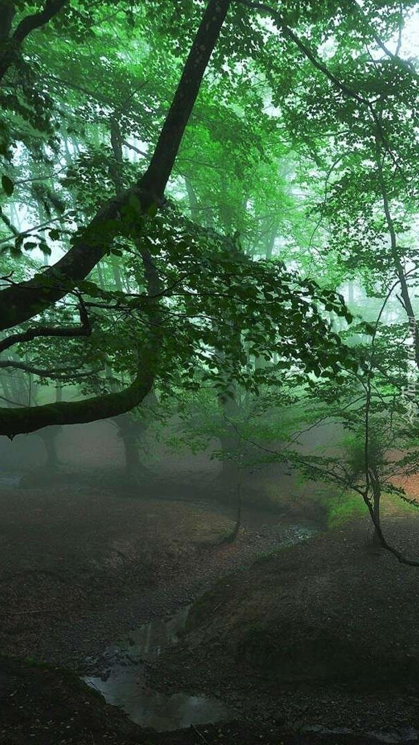 Mglisty las w Hiszpanii