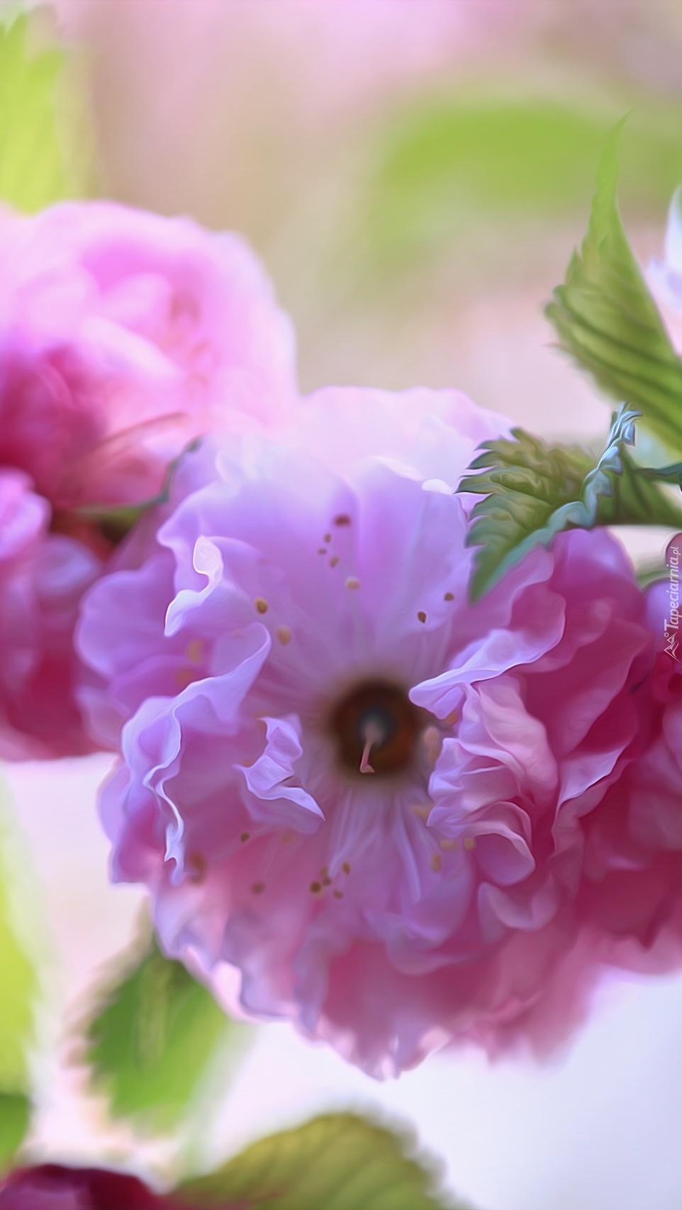 Migdałowiec o różowych kwiatach