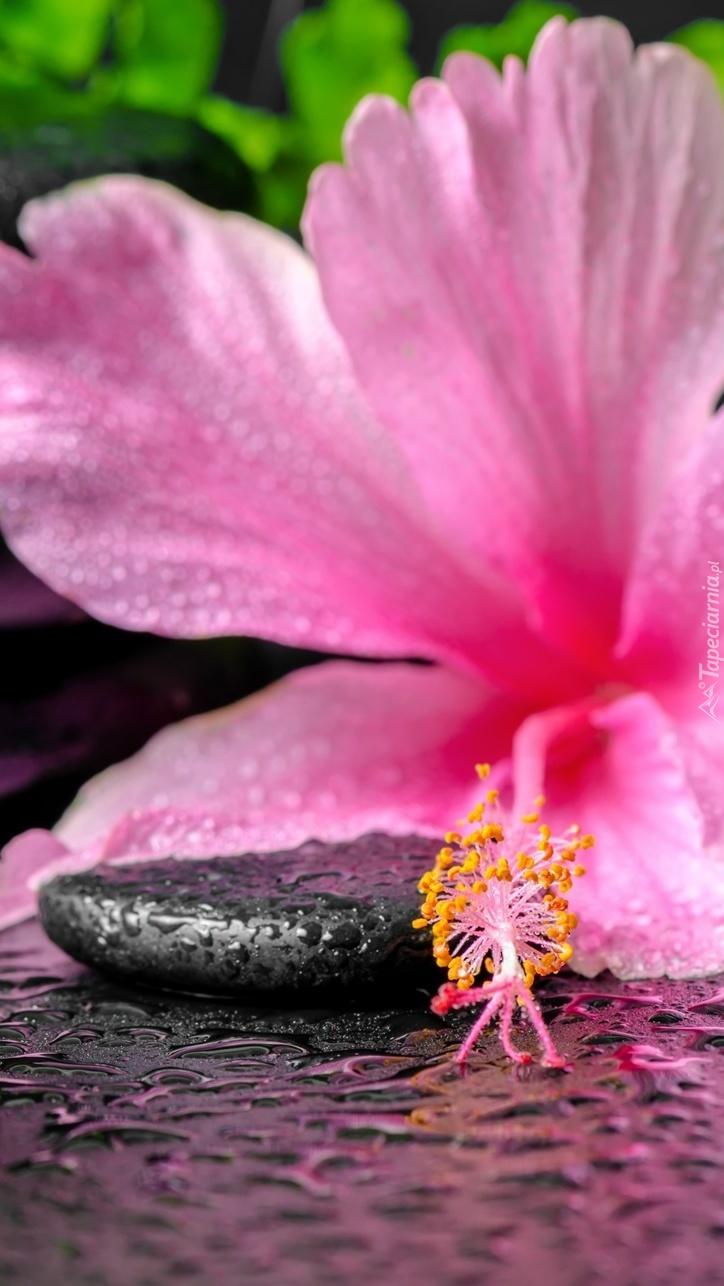 Mokry kamień obok hibiskusa