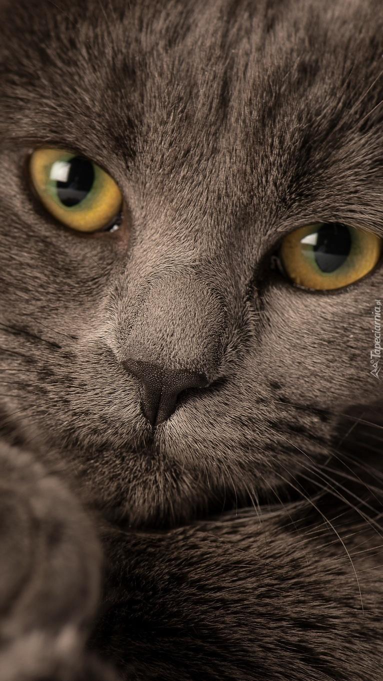 Mordka kota