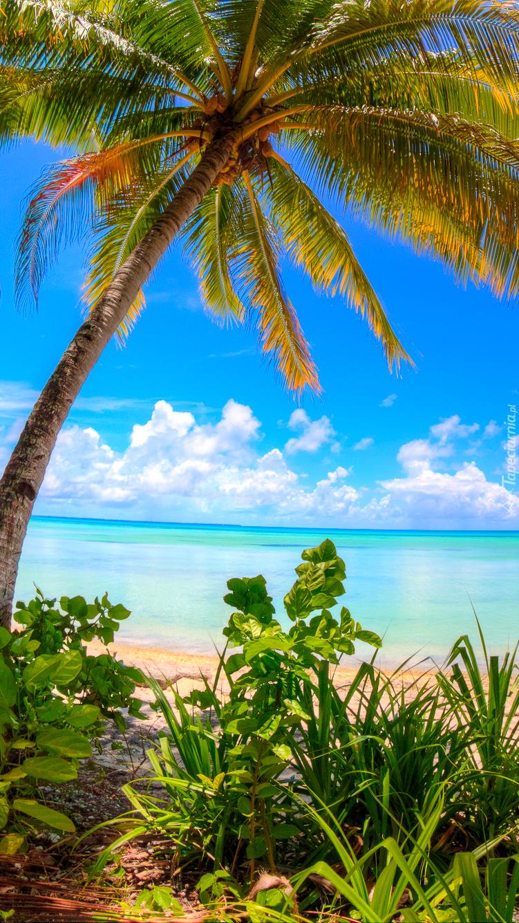 Morska plaża z palmami