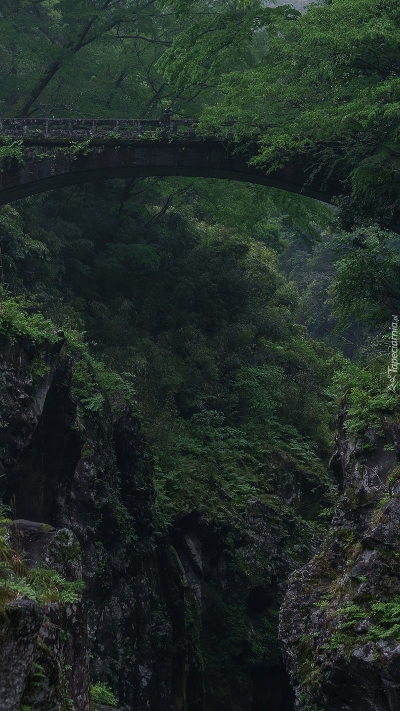 Most nad wąwozem