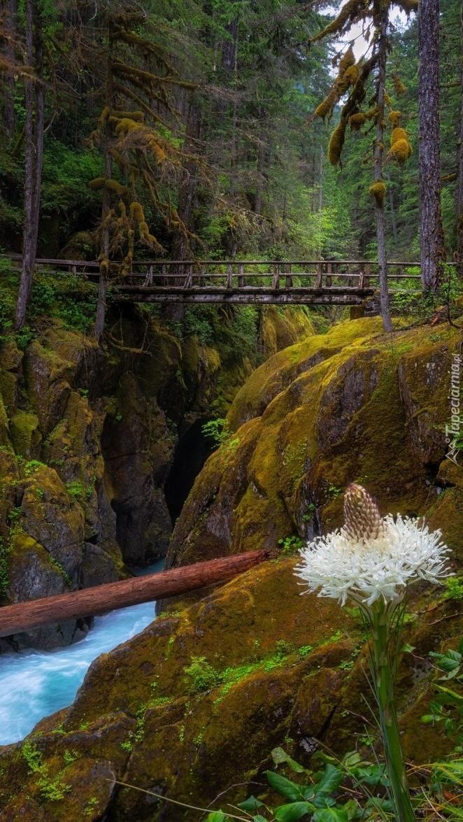 Mostek na omszałych skałach