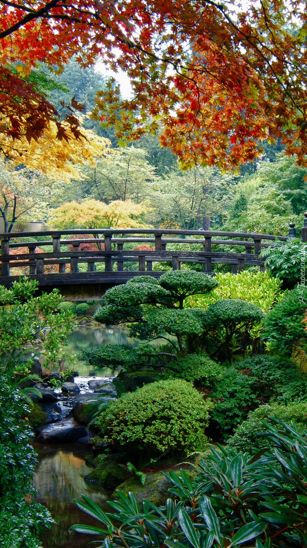 Mostek nad krzewami w ogrodzie