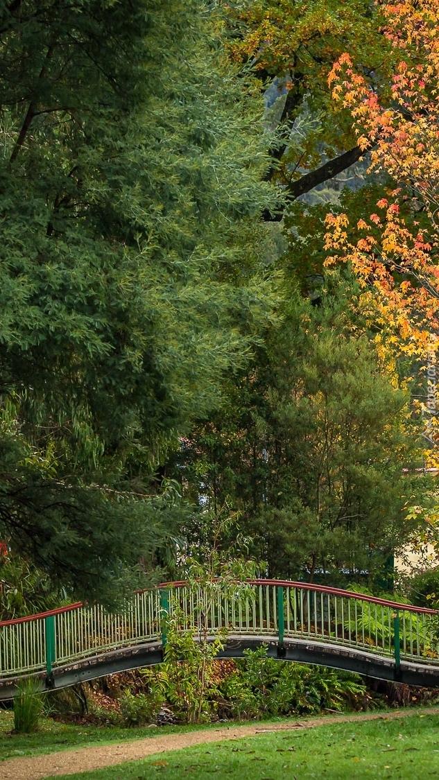 Mostek pod drzewami w parku