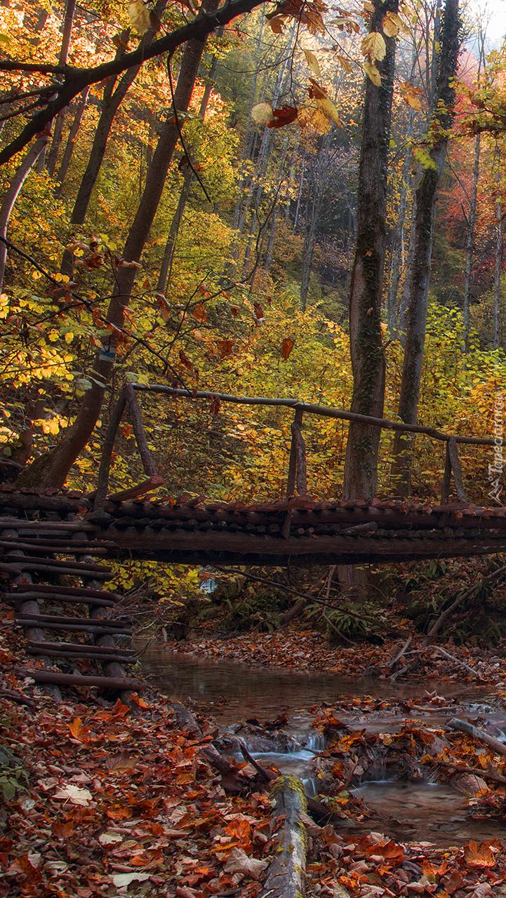 Mostek w jesiennym lesie