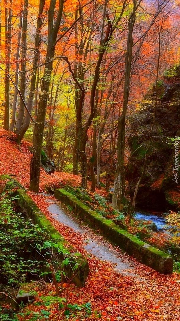 Mostek w lesie jesienią