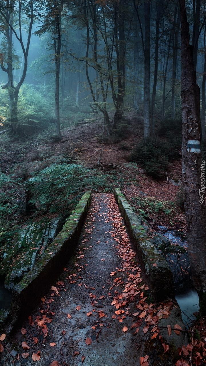 Mostek w zamglonym lesie