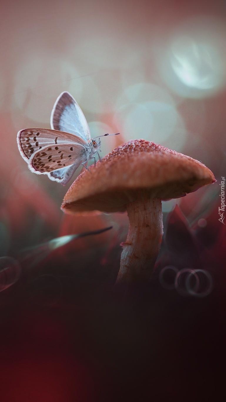 Motyl na grzybku