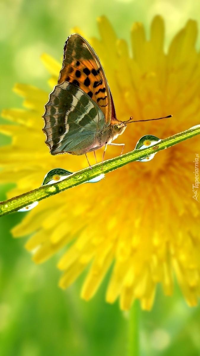 Motyl na łodyżce w kroplach wody