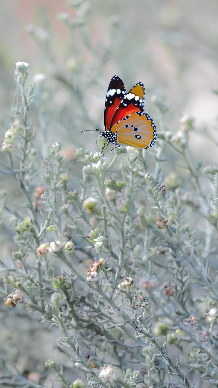 Motyl na roślinkach