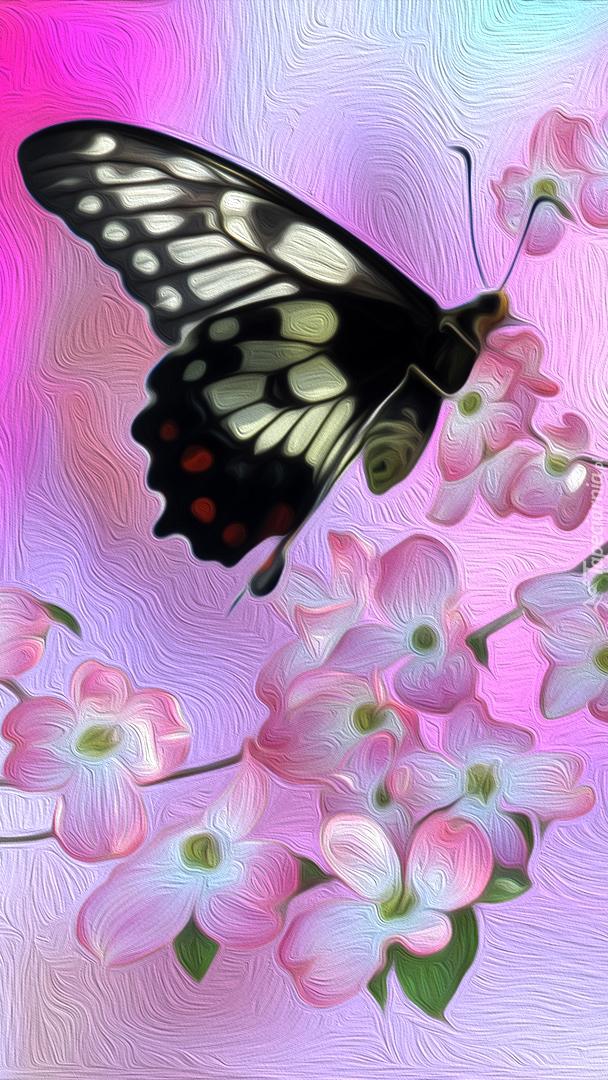 Motyl na różowych kwiatkach