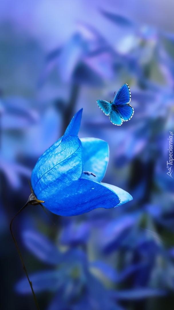 Motyl nad niebieskim dzwonkiem