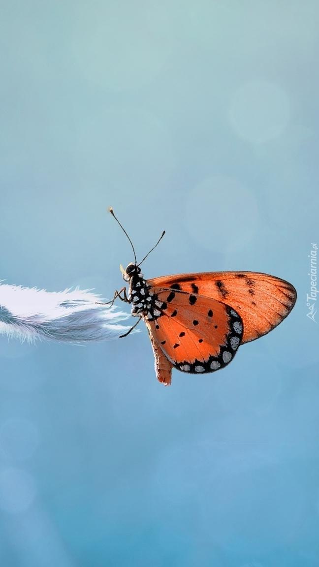 Motyl przyleciał