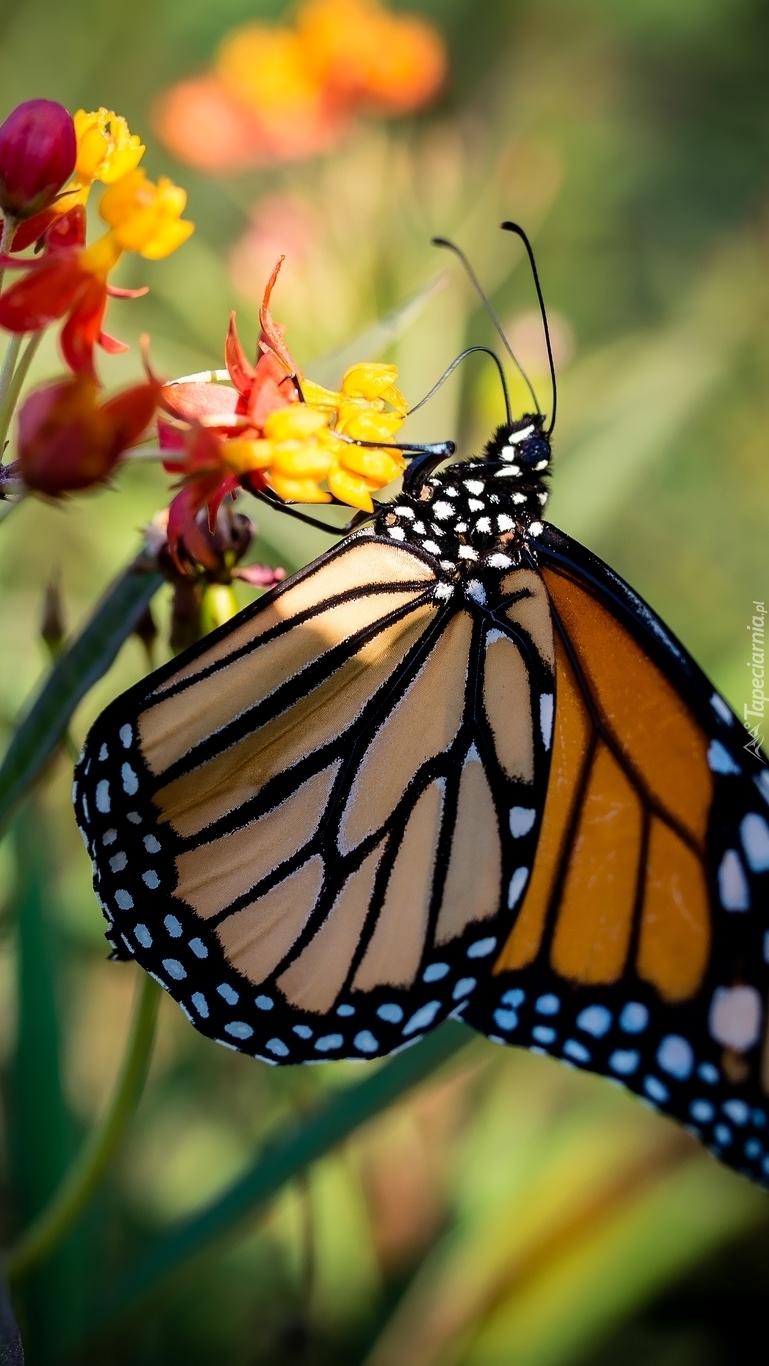 Motyl w cieniu kwiatka