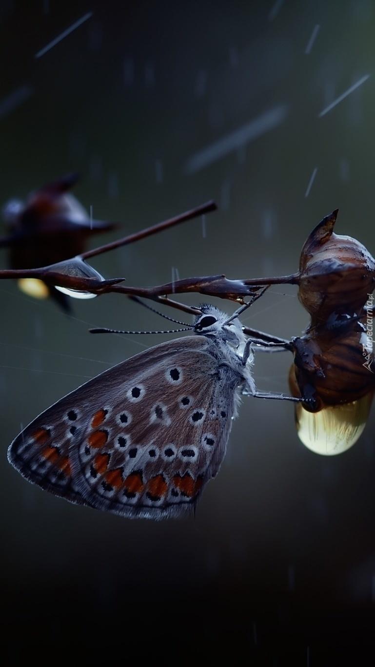 Motyl w deszczu