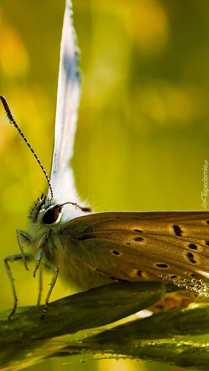Motyl w kropelkach wody