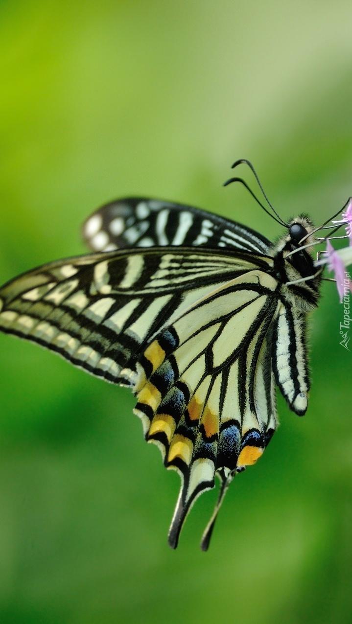 Motyl w zbliżeniu