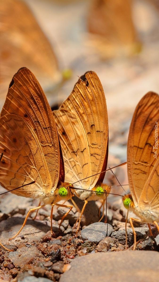 Motyle na kamieniach