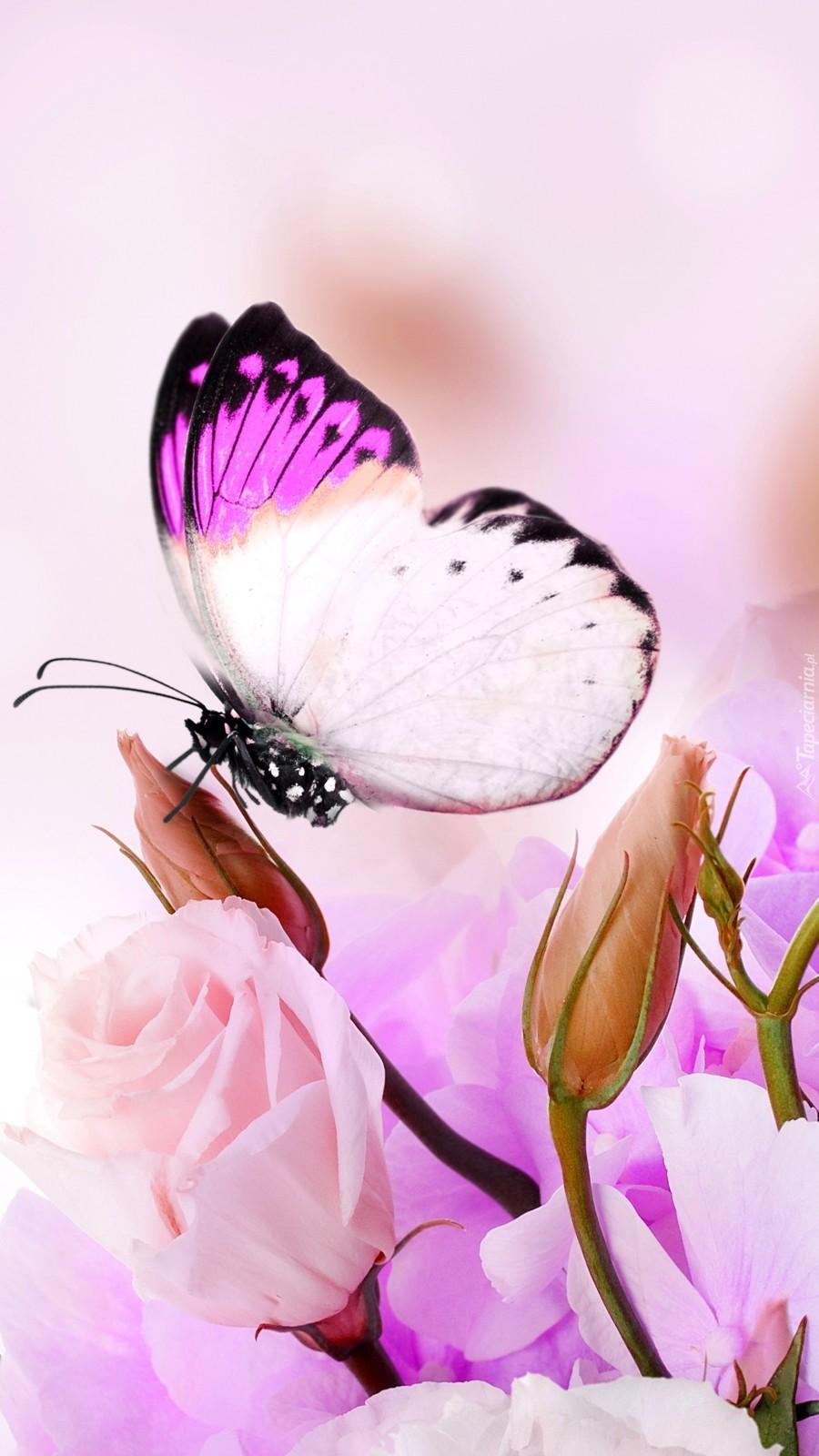 Motylek muskający kwiatek