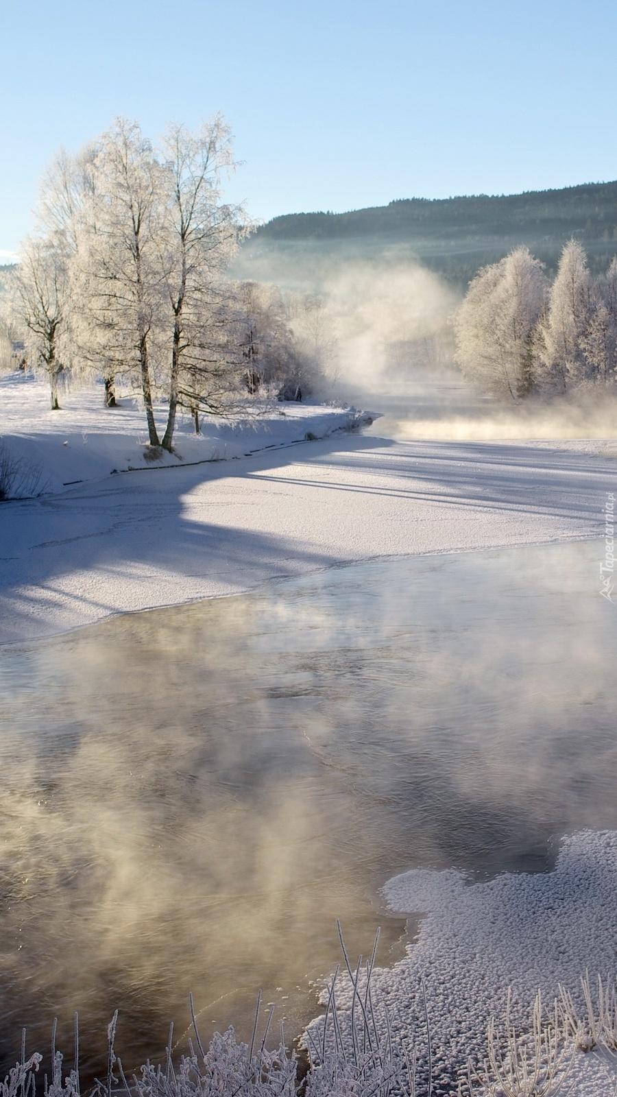 Mroźny krajobraz we mgle