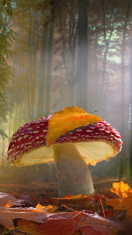 Muchomor w lesie niczym granat na poligonie
