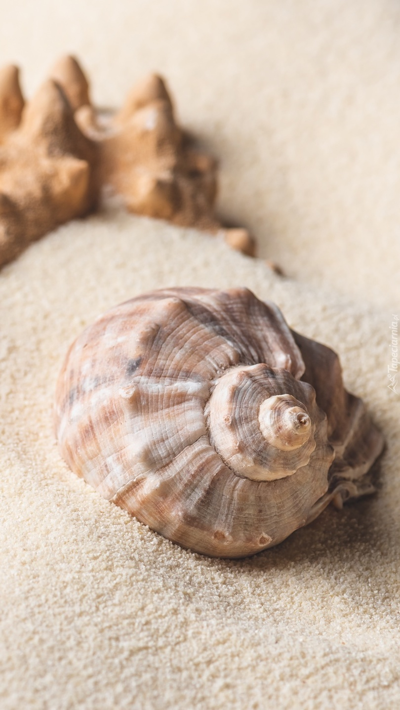 Muszelka na piasku
