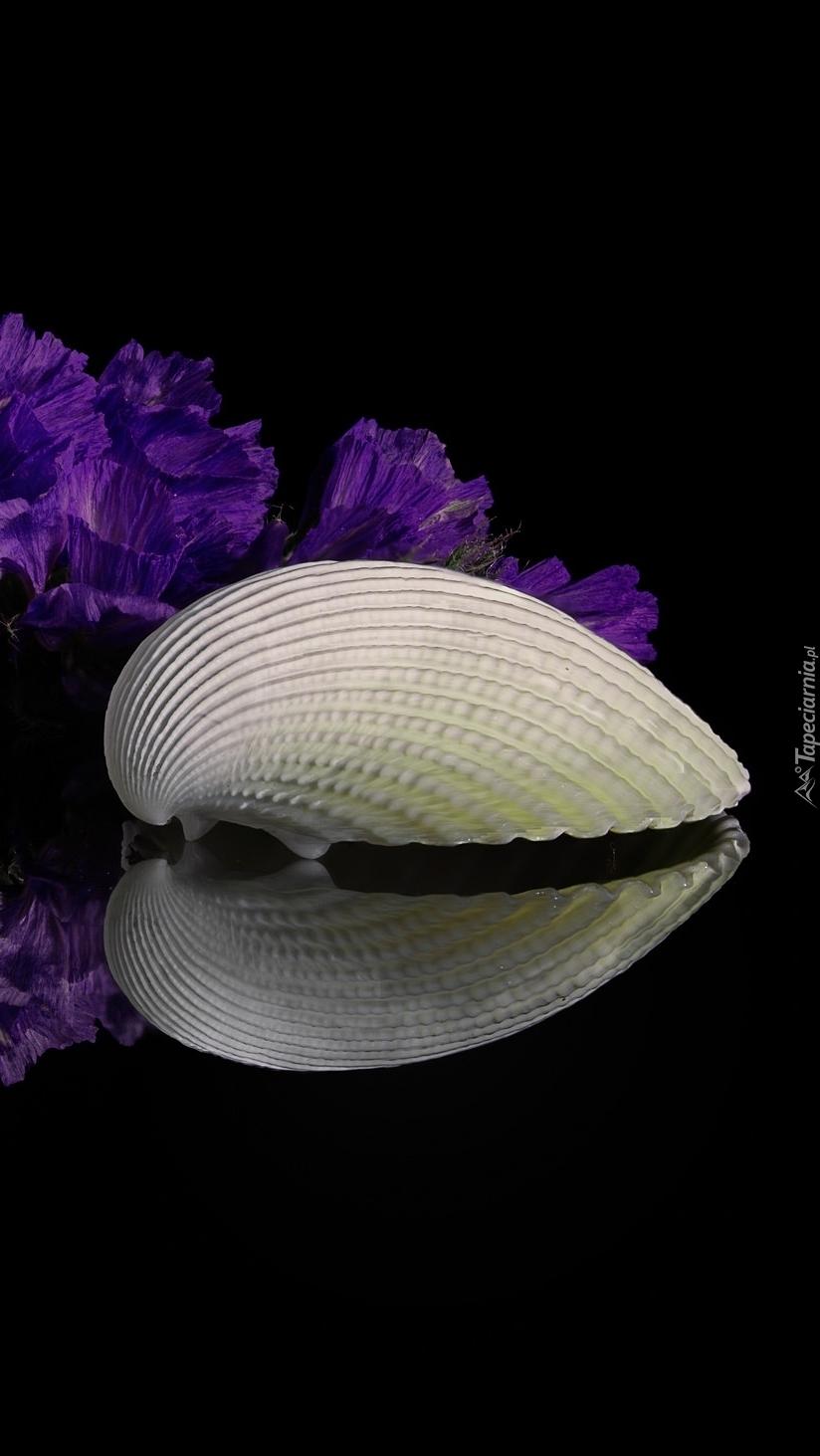 Muszelka obok kwiatów w odbiciu