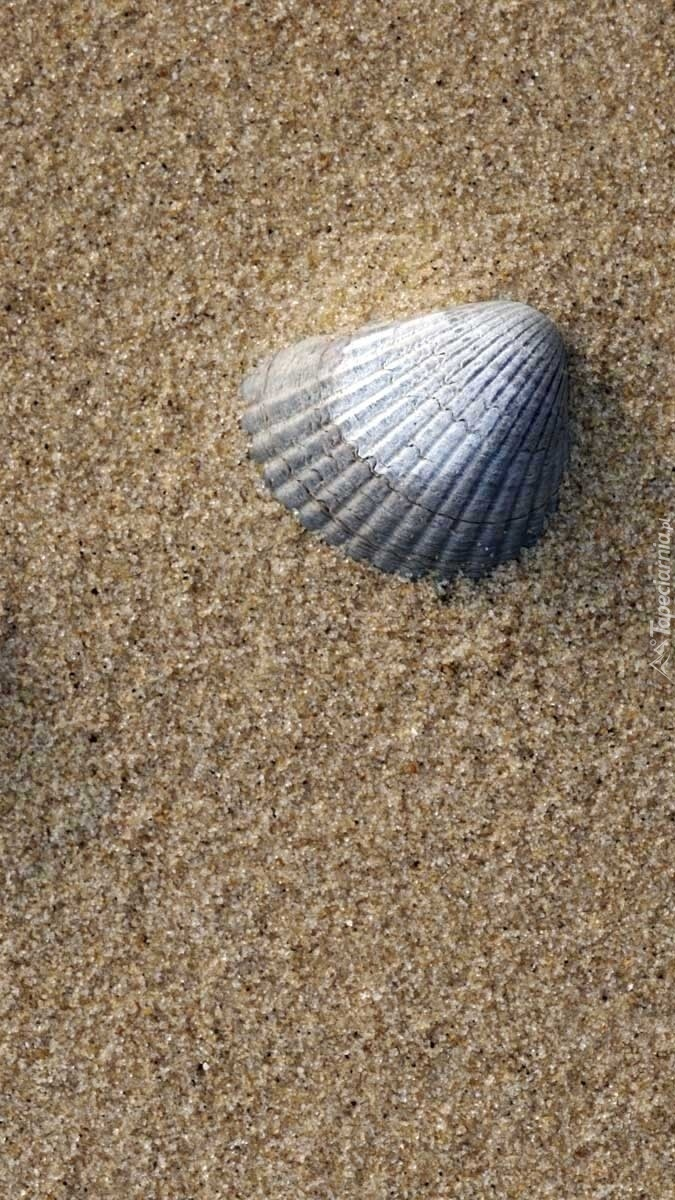 Muszelka w piasku