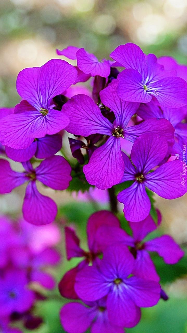 Na jednej łodyżce a tyle kwiatów