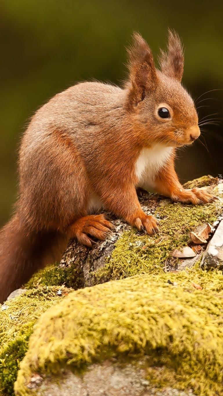 Na skałach siedzi ruda wiewiórka