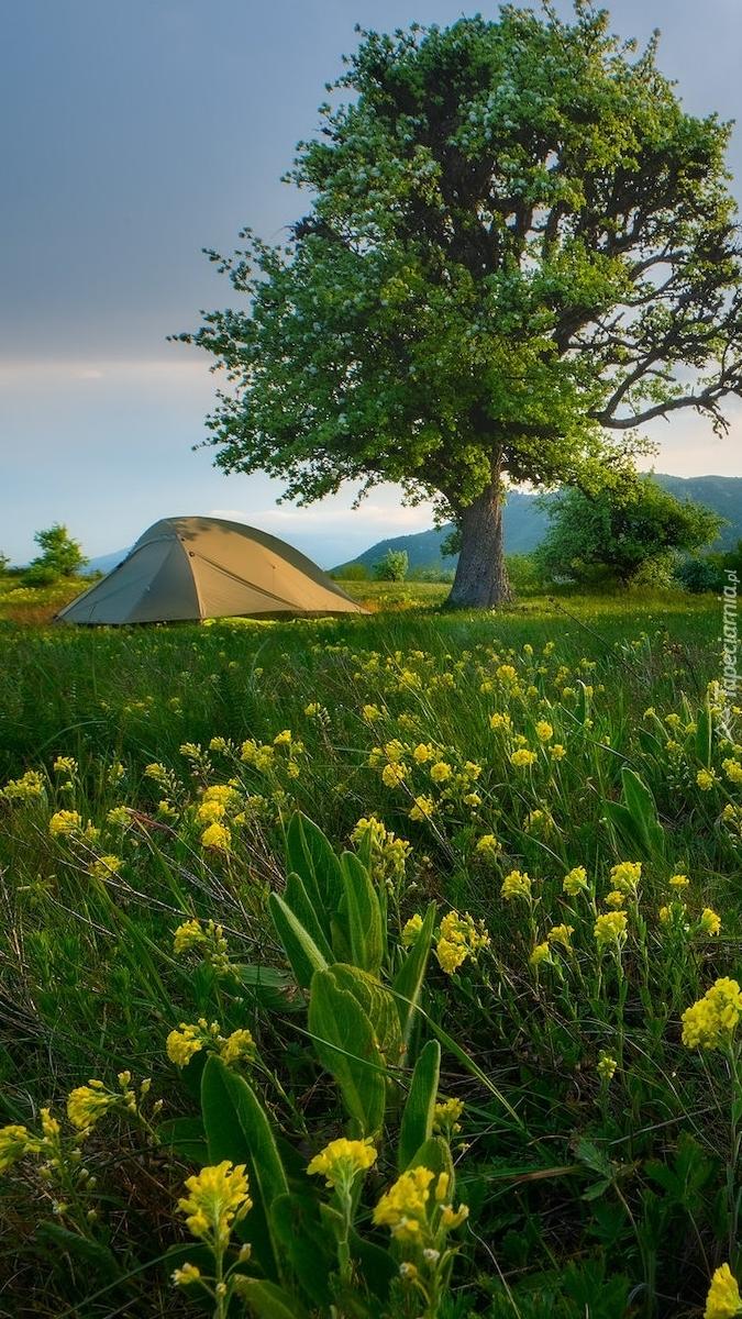 Namiot na łące pod drzewem