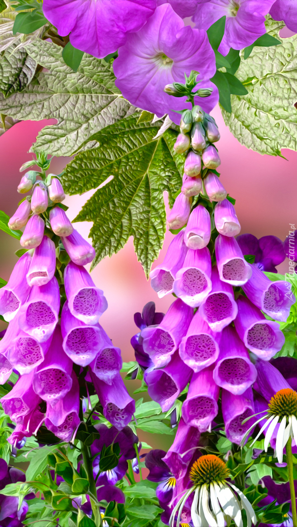 Naparstnice fioletowe