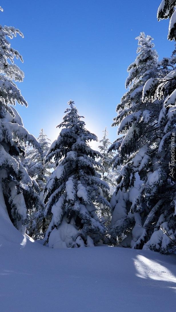 Nasze gałęzie są ciężkie od śniegu