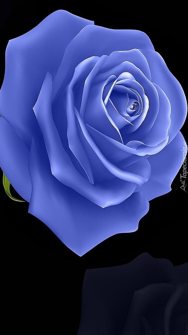 Niebieska róża na czarnym tle