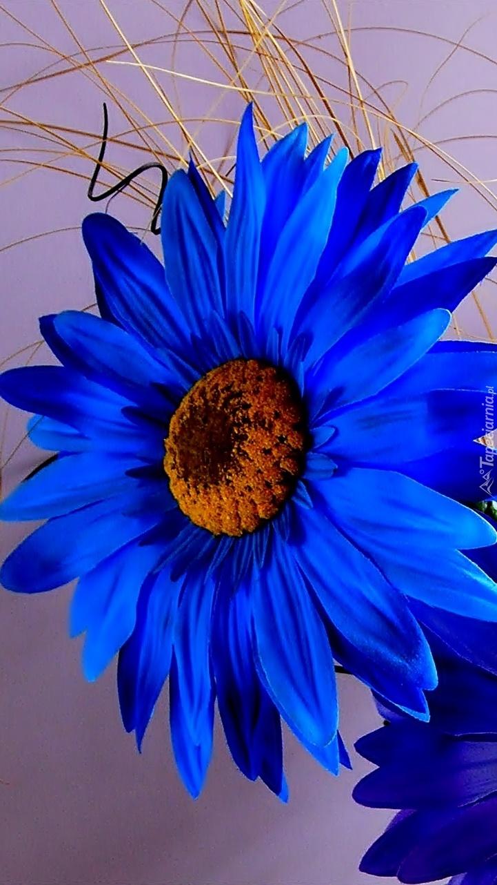 Niebieski duży kwiat