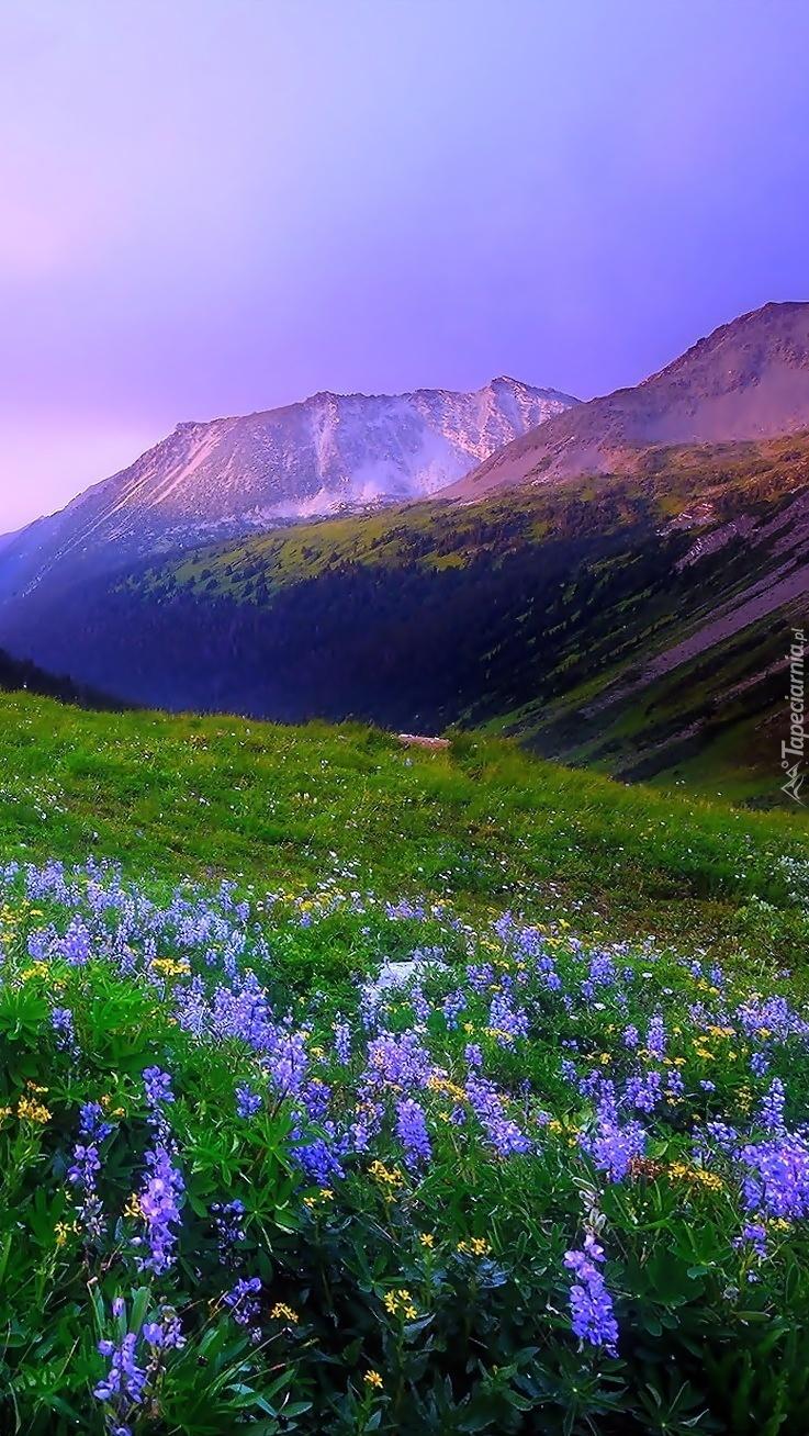 Niebieski łubin w górach