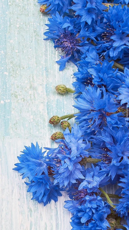 Niebieskie chabry