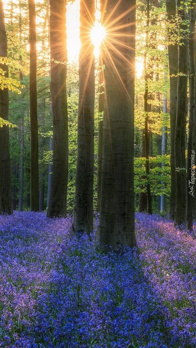 Niebieskie hiacyntowce pod drzewami