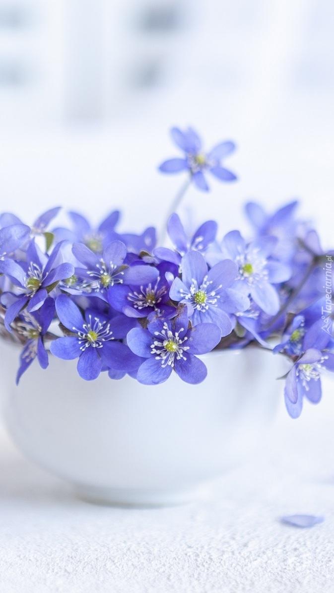 Niebieskie przylaszczki w miseczce