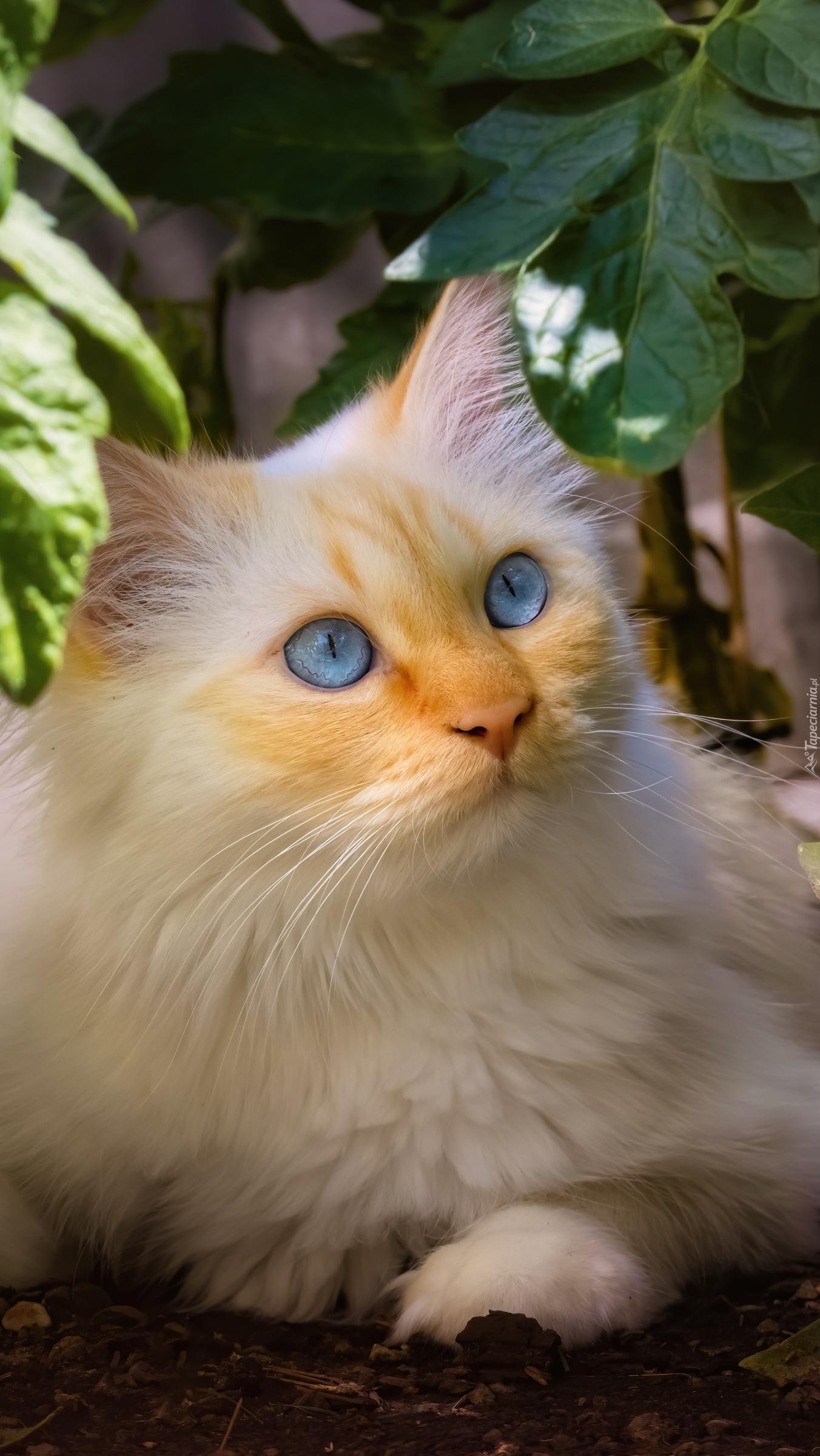 Niebieskooki kot pod liśćmi