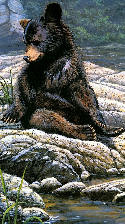 Niedźwiedź czarny na skałach