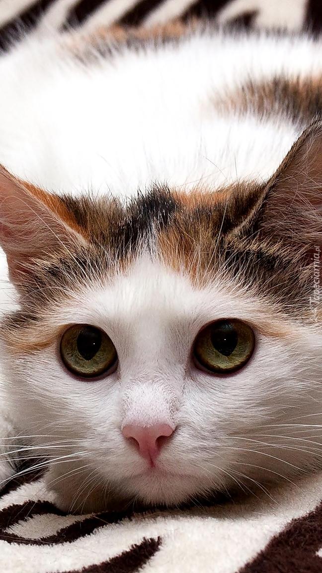 Niespokojny kotek leży na kocyku