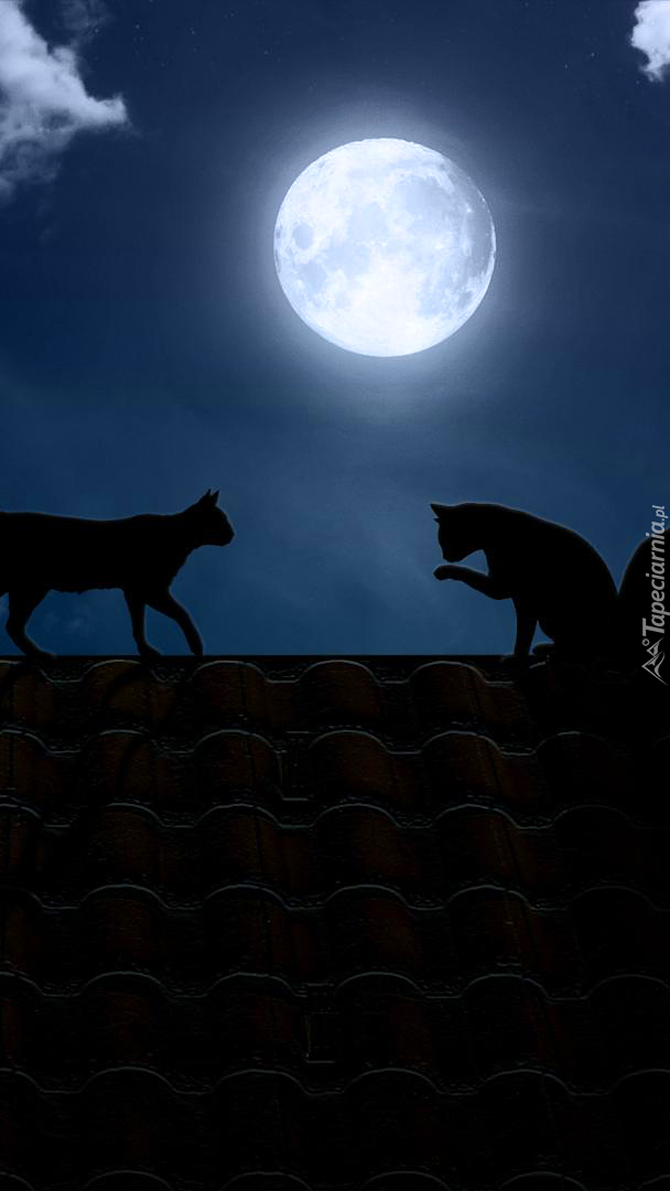 Nocne spotkanie kotów na dachu w blasku księżyca