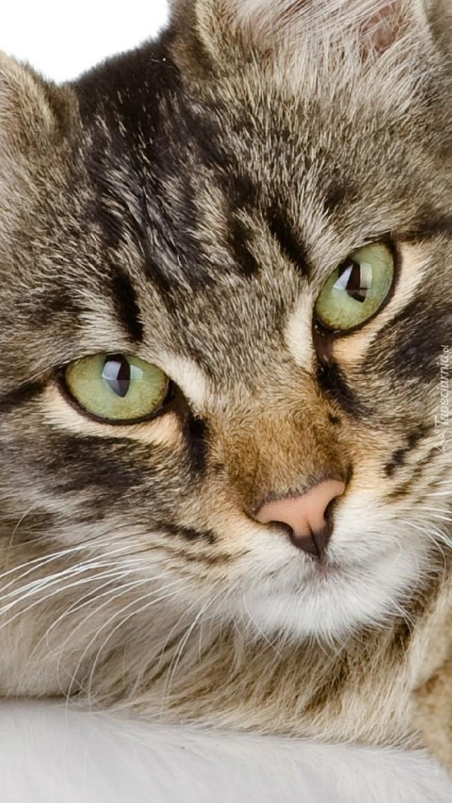 Oczy kotka