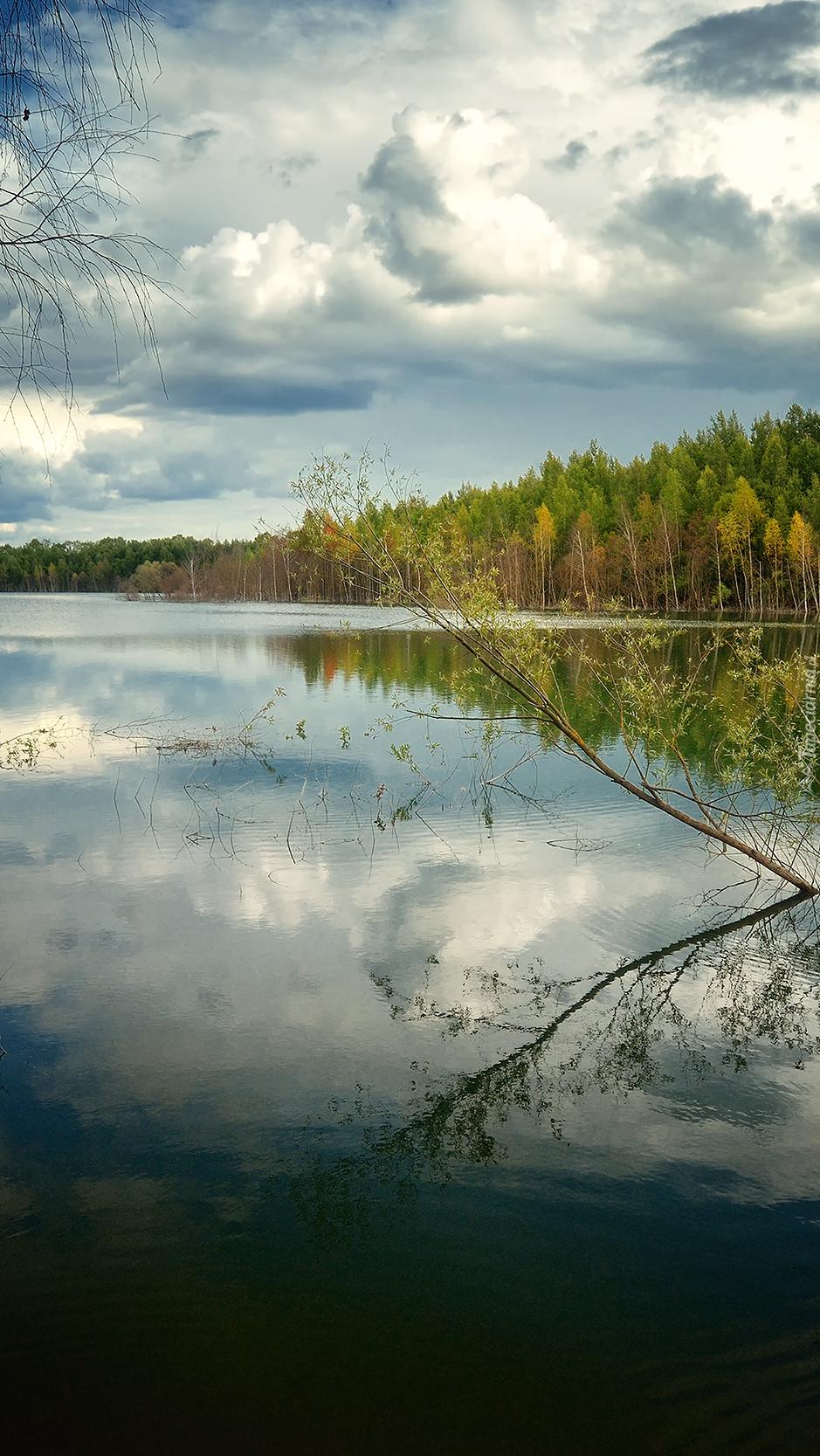 Odbicie chmur i drzew w jeziorze